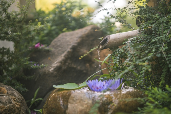 Beautiful zen garden with lotus flower and bamboo fountain on nature background