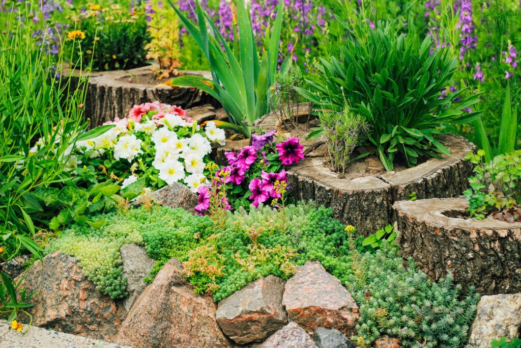 Alpine style flower bed with stones and succulents.