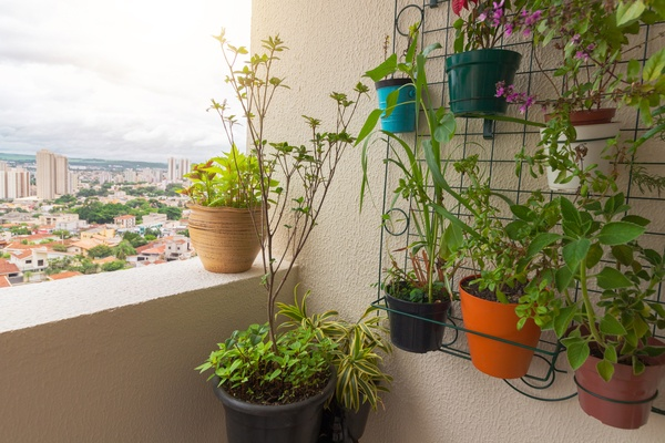 Vertical garden on the balcony of the building. Various types of plants