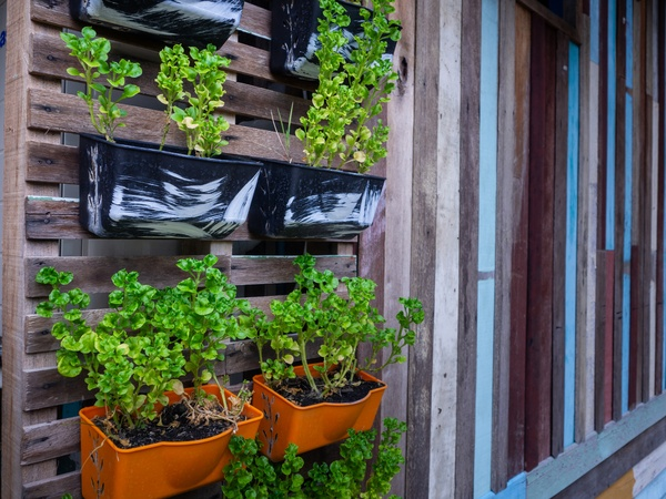 Small green purple and different color leafy plant pots hanging wooden wall