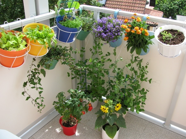 Balcony with flowers and vegetables