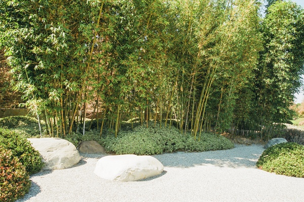 Bamboo Forest in Japanese Style Garden
