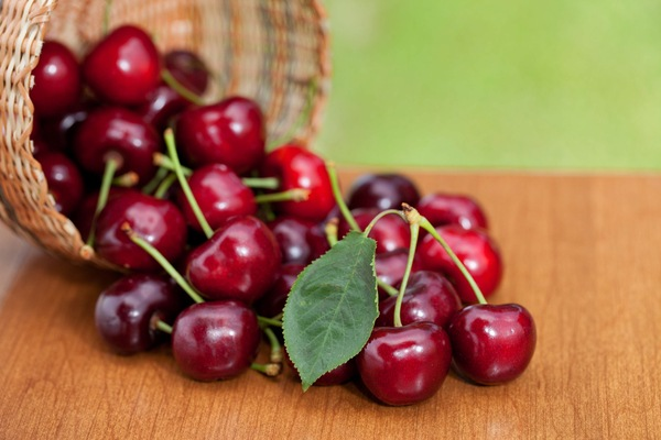 Red Ripe Cherries spilling from basket on a wood table